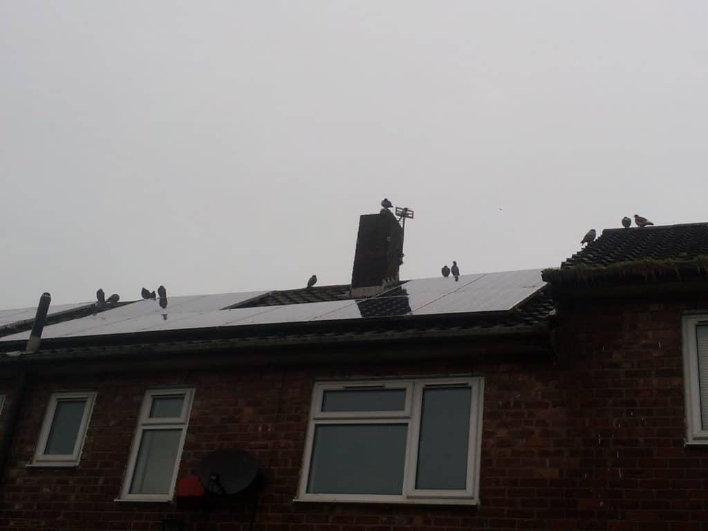 Urban Hawks Bird Proofing