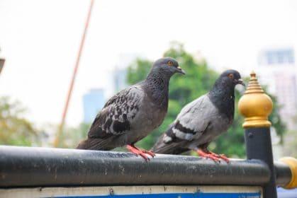 Urban Hawks Falconry